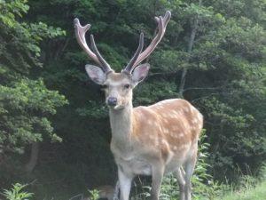 鹿とは | DEER INFO-日本で唯一の鹿情報総合サイト
