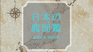 日本の鹿図鑑