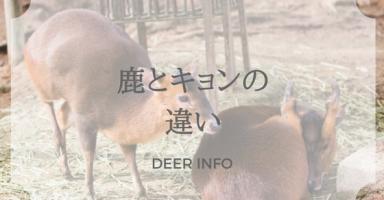 鹿とキョンの違い