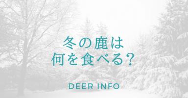 冬の鹿の食べ物
