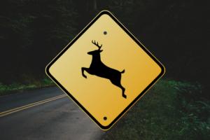 鹿との交通事故を防ぐ方法