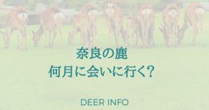 奈良の鹿何月に会いに行く?