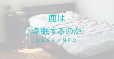 鹿は冬眠するか