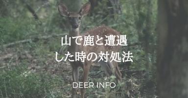 山で鹿と遭遇した時の対処法