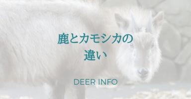 鹿とカモシカの違い