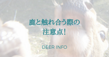 鹿と触れ合う際の注意点