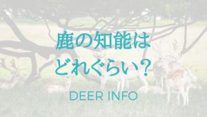 鹿の知能はどれぐらい?高い?低い?