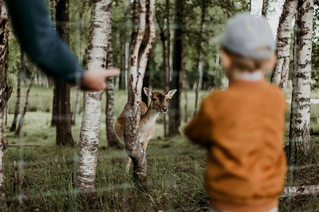 鹿の学習能力