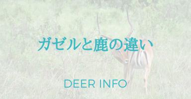 ガゼルと鹿の違い