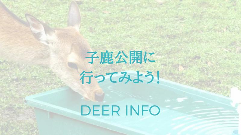 奈良の赤ちゃん鹿特別公開に行ってみよう
