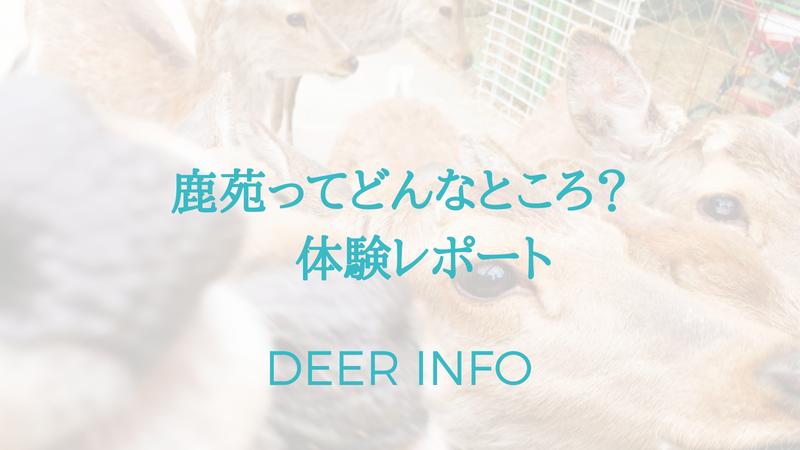 鹿苑体験レポート