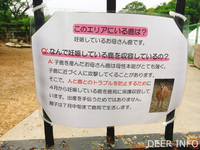 鹿苑にはどんな鹿が収容されるのか