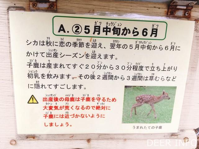 鹿クイズの答え
