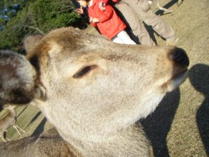 嫌そうにしている鹿