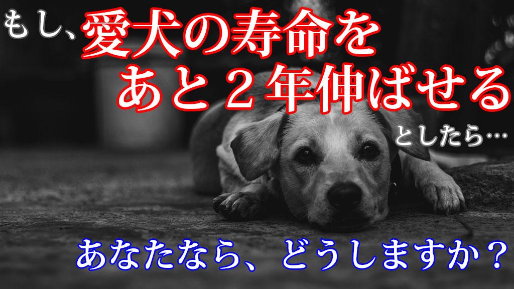 愛犬の寿命をあと2年伸ばせるとしたらどうしますか?