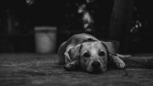 最近愛犬があまりエサを食べない…