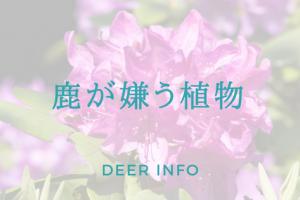 鹿が食べない/嫌いな植物ランキング