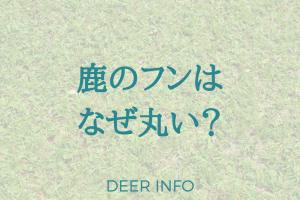 鹿のフンはなぜ丸い?