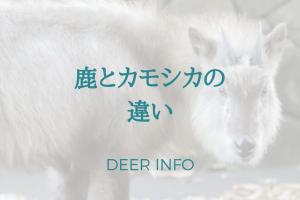 カモシカは鹿じゃない!カモシカと鹿の違いって何?