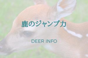 鹿のジャンプ力は何メートルぐらいあるの?