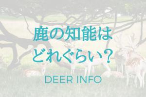 鹿の知能ってどれぐらい?犬や猫よりも賢いの?