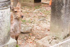 奈良公園では、夜は何時まで鹿を見ることができますか?
